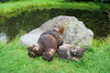 SC 136 Sleeping Bears