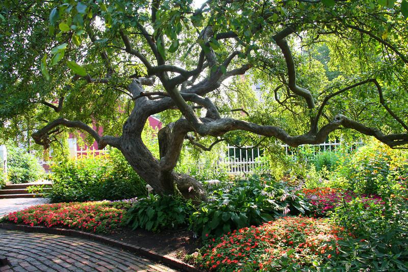 SC 95 Prescott Park Tree
