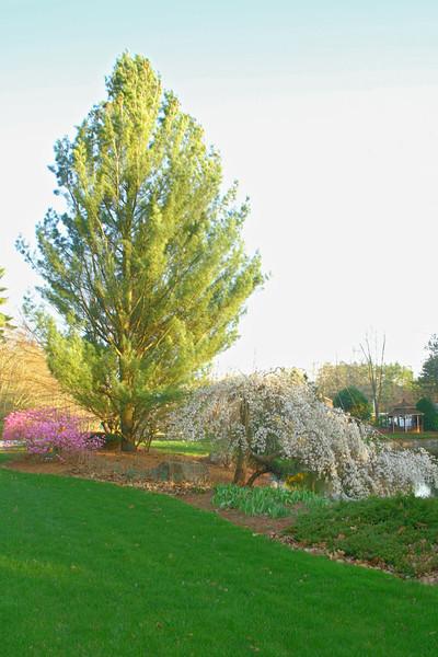 SC 85 Springtime
