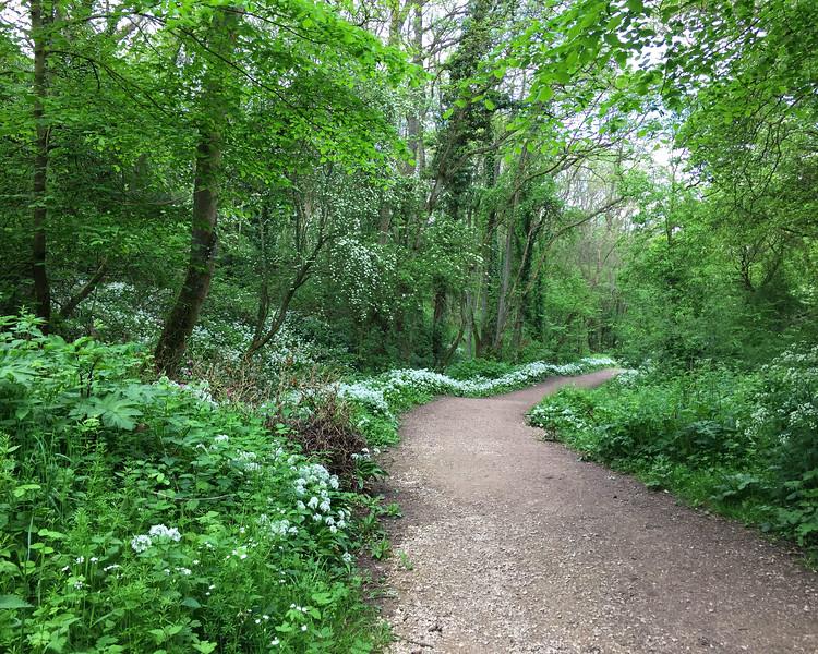 SC 325 Peaceful Path - Goatland, UK