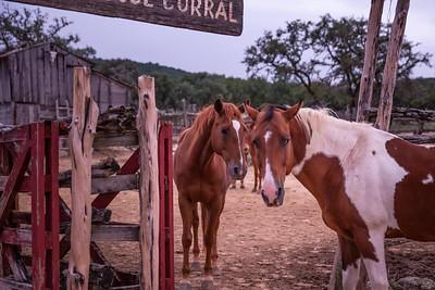 Dixie Dude Ranch-20