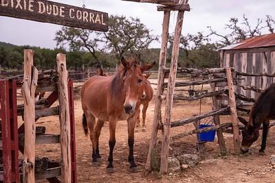 Dixie Dude Ranch-23