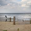 black bird by the ocean 2-