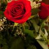 dales roses _MG_8347-2