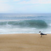 gull on the beach-