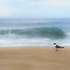 gull on the beach-