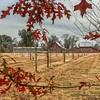 Castle barns in fall sm-