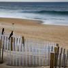 black bird by the ocean 1-