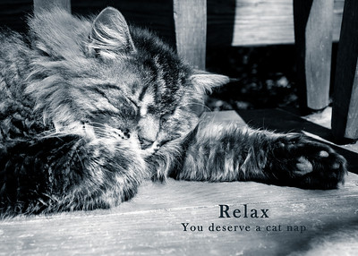 relax cat nap-