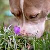 Jazzy flowers wite bugs (60)-Edit