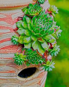 pot of cacti 8x10