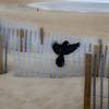 black bird by the ocean 3-