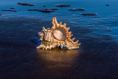 """""""Seashell Glow"""""""