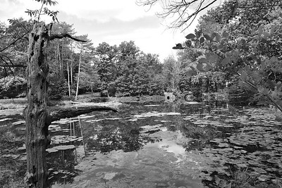 Strawberry Pond, North Chagrin Reservation (Mayfield Ohio)