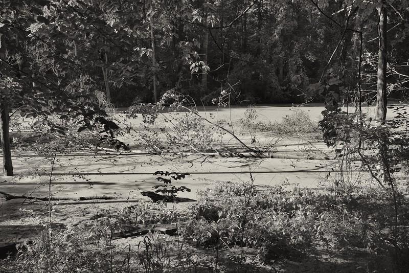 Wetland Area in Old Woman's Creek Nature Area (Huron, Ohio)