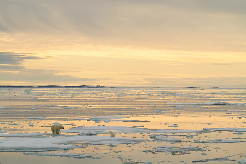 A mother polar bear and her lone cub bask in the setting sun on thin sea ice off the coast of Svalbard, Norway.