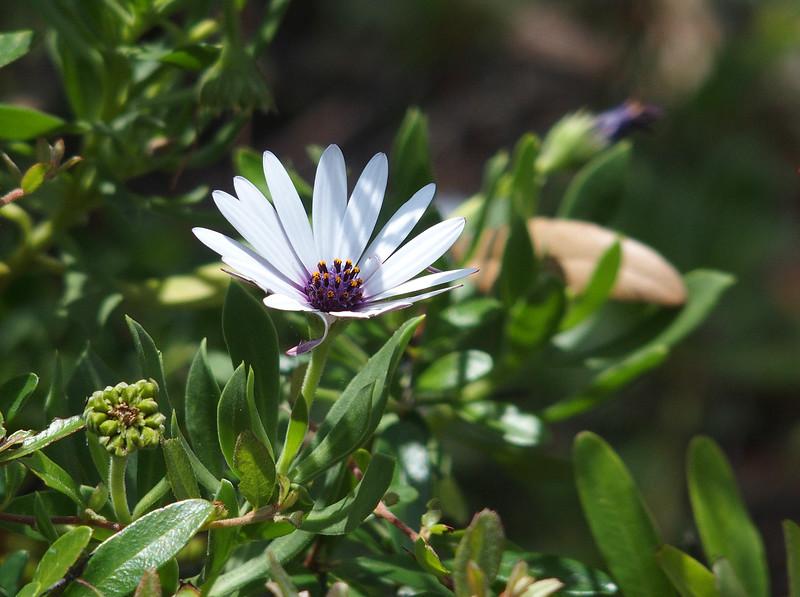 Unidentified flower near Presidio Park<br /> San Diego, CA
