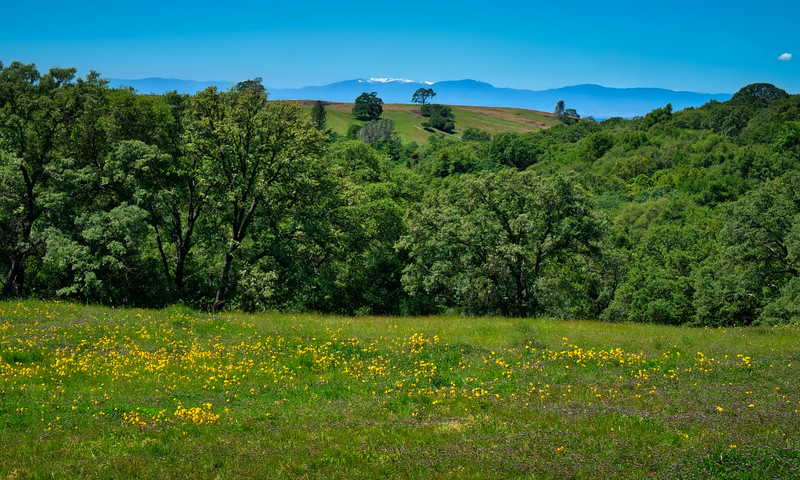 A field of wildflowers with Snow Mountain off in the distance