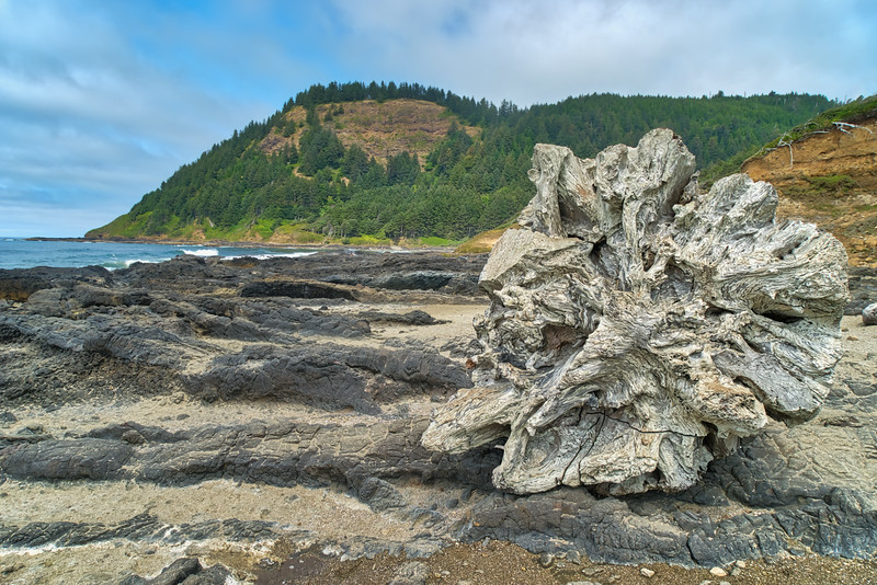 An old piece of driftwood along Cape Perpetua
