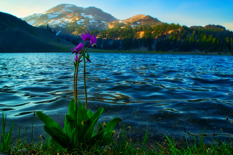 Flowers on the shore of Moraine Lake