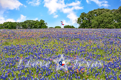 """I Love Texas - Wildflower Dream"""