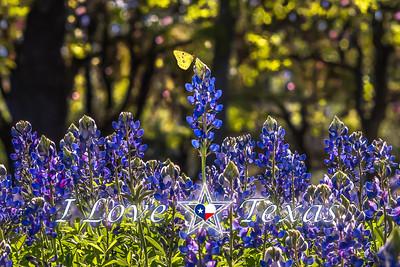 """I Love Texas - Bluebonnet Beauty"""