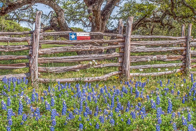 """Texas Fence Line"""
