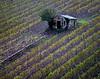Tuscany, Italy DP--8-8A