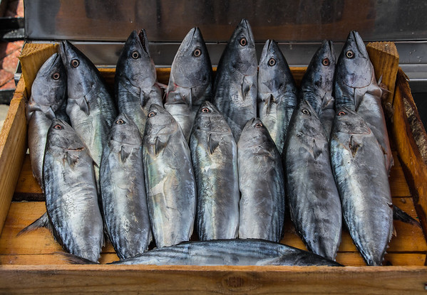Mediterranean seabass, stack of crates of freshly caught fish
