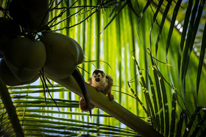 Costa Rica  DP-2606B