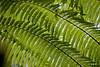 Costa Rica  DP-8733B