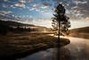 Yellowstone National Park, Wyoming  DP-9918B