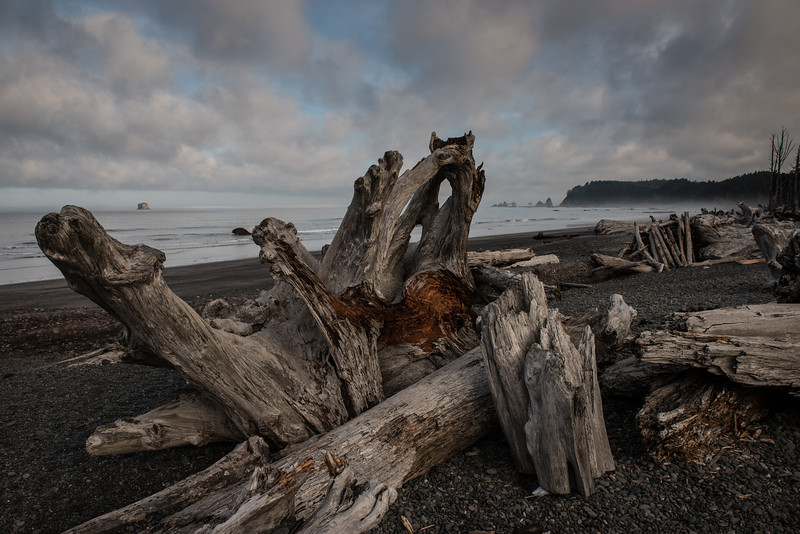 Olympic Peninsula, Washington  DP-8870B