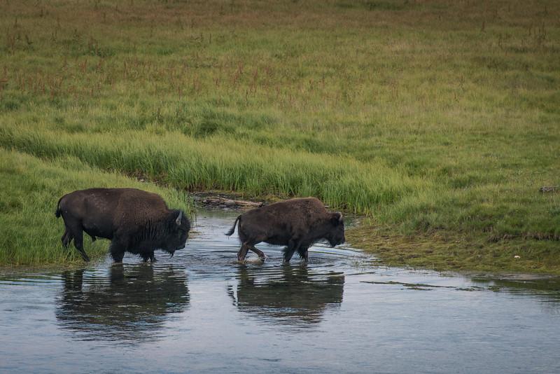 Yellowstone National Park, Wyoming  DP-0336B