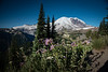 Mount Rainier, Washington  DP-8707B