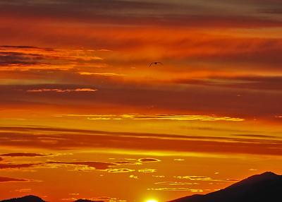 ALS_0453-adj-Sunset-Gull