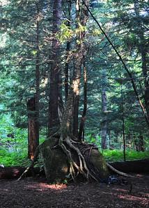 PSP_0088-5x7-Tree