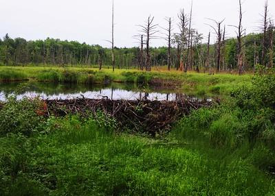 PSP_0039-7x5-Beave Pond