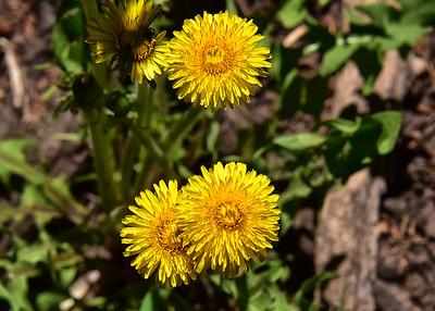 NEA_3602-7x5-Flowers