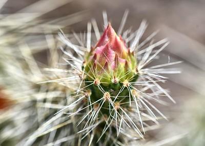 BOV_3953-7x5-Cactus