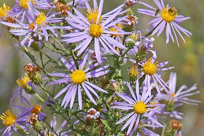 DSC_2735-6x4-Flowers