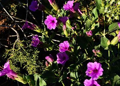 NEA_1148-7x5-Flower