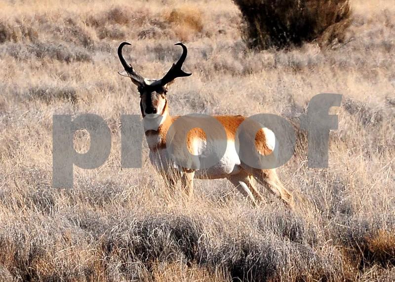 NEA_7401-7x5-Prong Horn