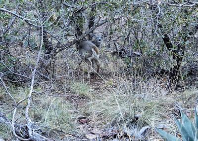 NEA_8665-7x5-Deer