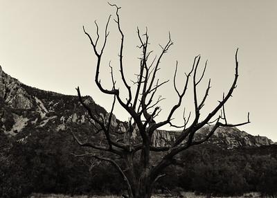 NEA_8643-7x5-Tree-BW