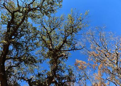 NEA_8743-7x5-Trees