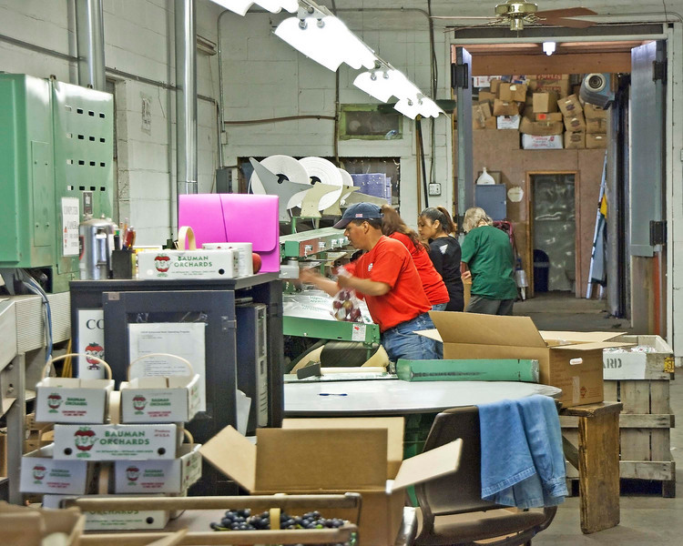 Photo: Processing and packing facilities at Bauman Orchards in Rittman, Ohio (Wayne County, Ohio).  Role in Wayne County's Ag-Bio Cluster: Orchard, apple grower, retail shop, tourism and travel generator.  Website: http://baumanorchards.com/