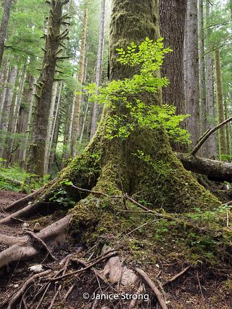 Janice-Strong-Vancouver Island-1151