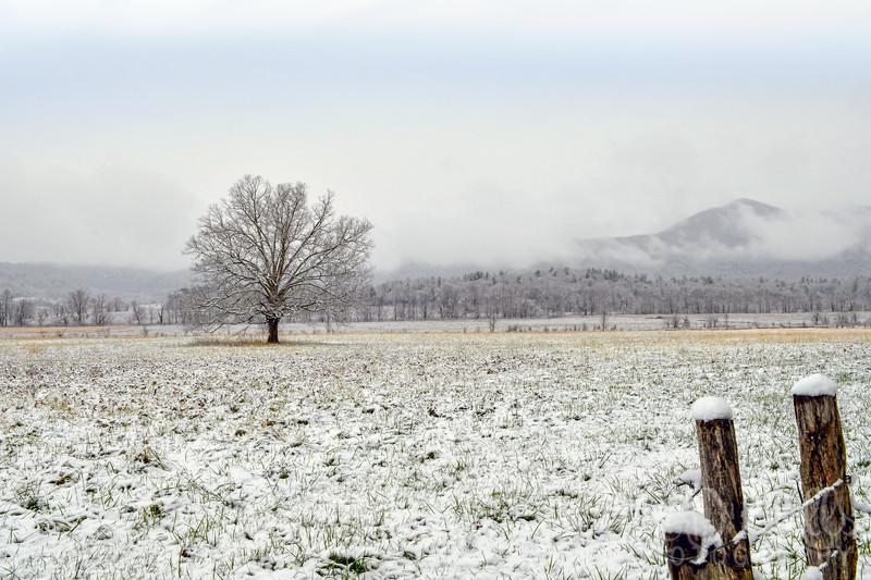 Winter Sentinel