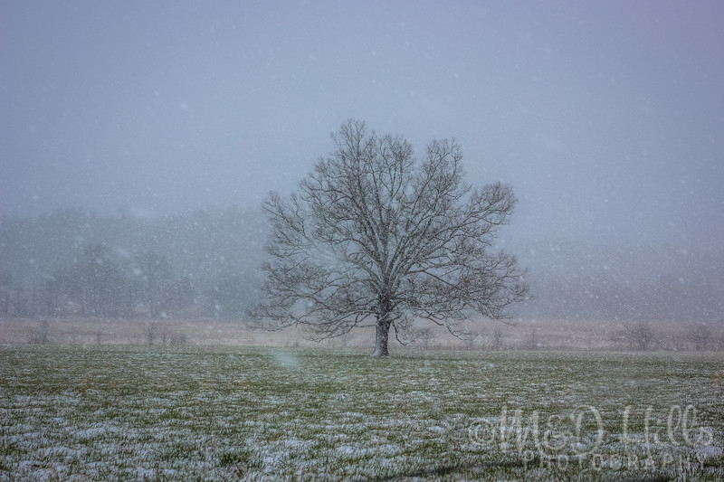 """Snow Falling On """"The Tree"""""""